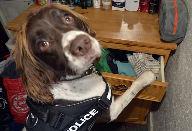 Specialist drug detection dogs have been introduced by British Transport Police (West Midlands Police/PA)