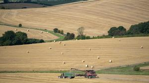 A combine harvester cuts the last of the wheat in a field