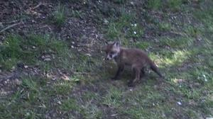 The RSPCA rescued a fox cub from a disused well (RSPCA/PA)
