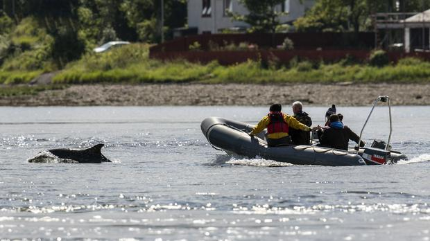 Campaigners are concerned about disturbance to marine wildlife from recreational activities (Whale and Dolphin Conservation/ C Phillips/PA)