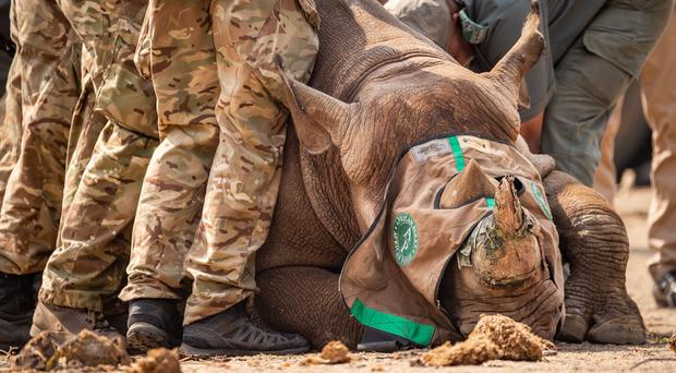A black rhino being transported to Malawi (Kyle de Nobrega/African Parks/MoD/PA)