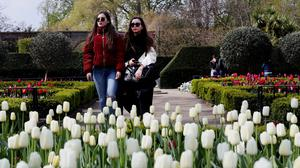 People walk past blossoming tulips in Holland Park, London (PA/Jonathan Brady)