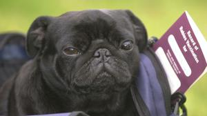 Pet owners will no longer be able to use pet passports for travel to the EU, ministers have warned (Tim Ockenden/PA)