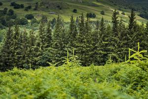 Landowners, forestry industry, environment groups and the public are being invited to give their views on woods (Forestry Commission/PA)
