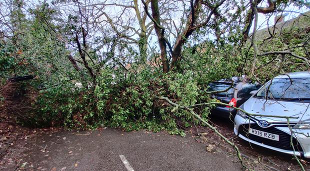 Trees were toppled by a tornado in Chertsey, Surrey (Connor Passey/PA)