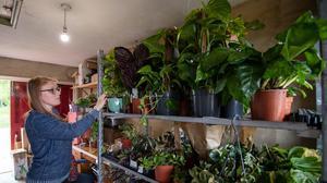 Kerri Notman at her home near Mattishall, Norfolk, where she has had to accommodate 12,000 plants from her gift and plant shop so that she can continue to fulfil online orders during the coronavirus pandemic (Joe Giddens/ PA)