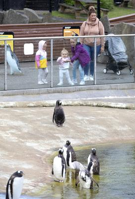 Edinburgh Zoo's penguins are always popular with the public (Jane Barlow/PA)