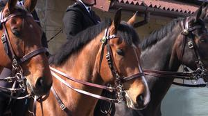 Hero the police horse (Avon and Somerset Police/PA)