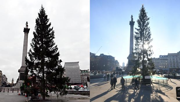 The tree in 2011, left, and the tree this year (PA)