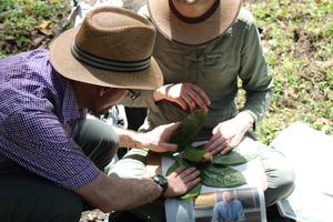Botanists are exploring Colombia for new and interesting plants (Mauricio Diazgranados/RBG Kew/PA)