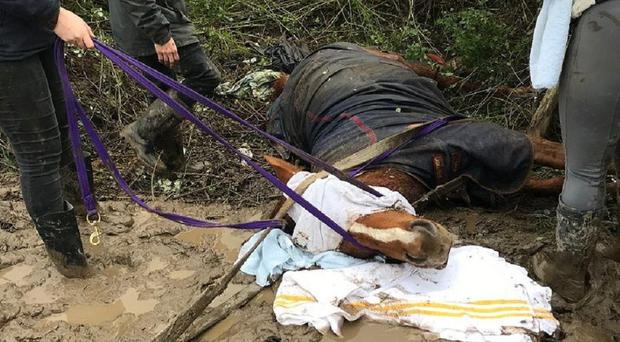 The horse was eventually freed by his owner and a vet (RSPCA Cymru/PA)