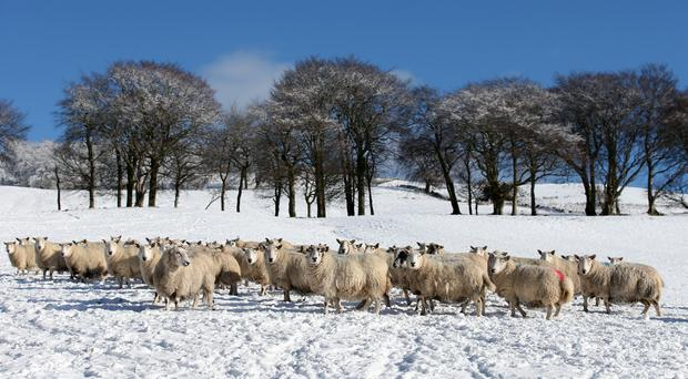 WWF Scotland is calling for more support for farmers (Andrew Milligan/PA)