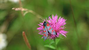 Gardeners are being encouraged to let weeds and wildflowers bloom for International Biodiversity Day (Jordans Creal/The Wildlife Trusts)