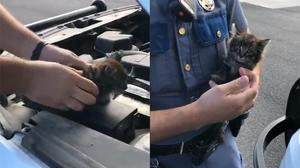The kitten had been under the bonnet for three days (@wspd3pio/Twitter)