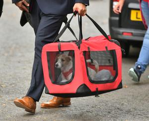 The couple adopted a 15-week-old Jack Russell-cross puppy (Dominic Lipinski/PA)