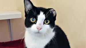 Litten, now named Oreo, in the care of the RSPCA (RSPCA/PA)