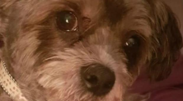Eccles the dog was stolen from his owner in Edinburgh (Police Scotland/PA)