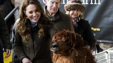 The Duchess of Cambridge strokes an alpaca during a visit to the Ark Open Farm (Liam McBurney/PA)