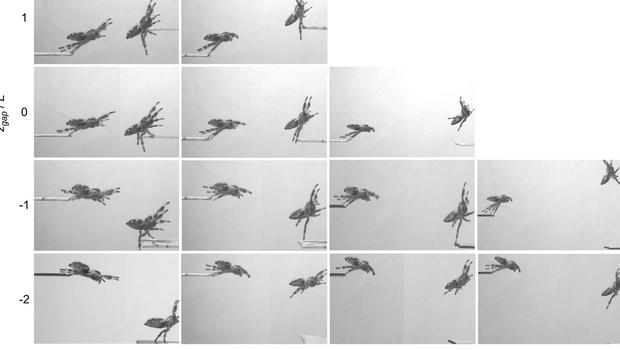 Snapshots of Kim, the performing jumping spider. (Dr Mostafa Nabawy, the University of Manchester/PA)