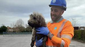 Engineer James Lewis with Olive, a Bedlington terrier, who had to be rescued from a pipe (Thames Water/PA)