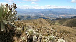 Colombia is one of the richest countries in the world in terms of its plant life (Mauricio Diazgranados/RBG Kew/PA)