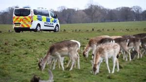 Police patrol Richmond Park, in Richmond upon Thames (Kirsty O'Cnoor/PA)