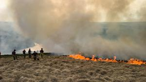 Wildlife species have returned to moorland devastated by fire a year ago, but the risk of more wildfires remains, the National Trust said (National Trust/Tom Harman/PA)