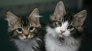There have been a very small number of confirmed cases in pets in other countries in Europe, North America and Asia (Nick Ansell/PA)