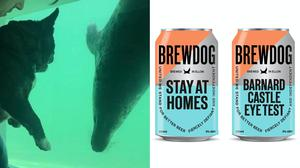 (The Cornish Seal Sanctuary and BrewDog)