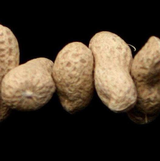 """Dry roasted peanuts may be more likely to trigger allergic reactions than those that are """"raw"""", a study has shown"""