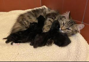The kitten has now been reunited with its family (RSPCA/PA)