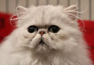 There is no evidence that pets or other domestic animals are able to transmit the virus to people (Andrew Milligan/PA)