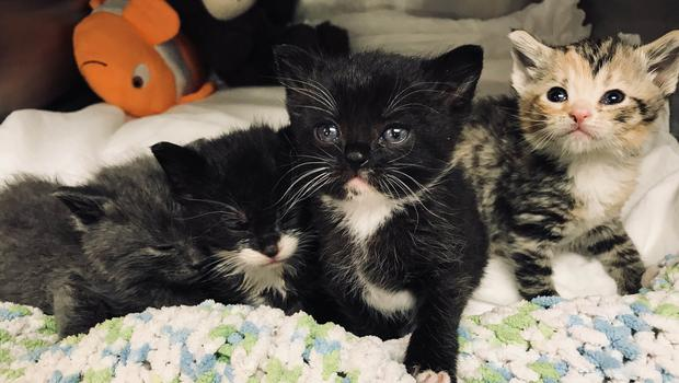 Four kittens were rescued
