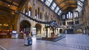 Dippy the Diplodocus is going on tour