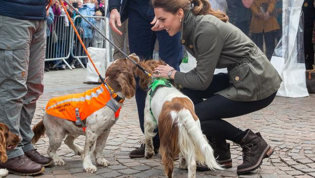 The Duchess of Cambridge meets three dogs Max, Paddy, and Harry (Andy Commins/Daily Mirror/PA)