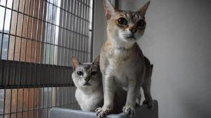 Cats Isobel and Basil at Battersea Cats And Dogs Home (Battersea Cats And Dogs Home)