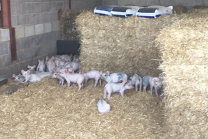 Thieves have stolen 67 piglets from a farm in Fordingbridge, Hampshire. (Hampshire Constabulary/PA)