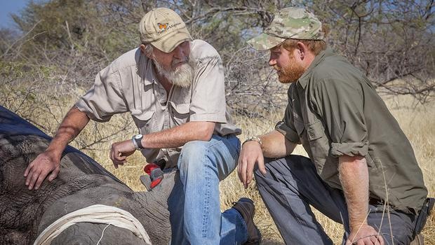Prince Harry, pictured here during a Rhino Conservation Botswana project in Botswana, has a deep affinity for the African country. (Rhino Conservation Botswana)