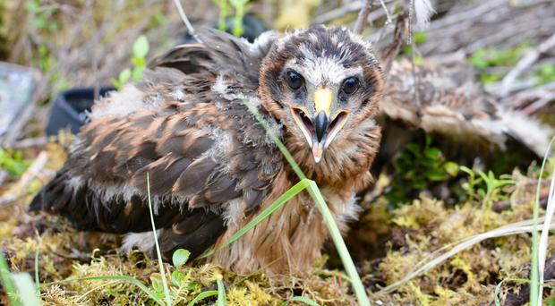 The area where Skylar disappeared has a history of similar cases (RSPB Scotland/PA)