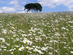 The 'rivers of wildflowers' the routes could create would help wildlife move through the landscape (Leanna Dixon)