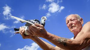 John Greenshield holds one of his racing pigeons after it returned to his coop complex in Wombwell, South Yorkshire (Danny Lawson/PA)