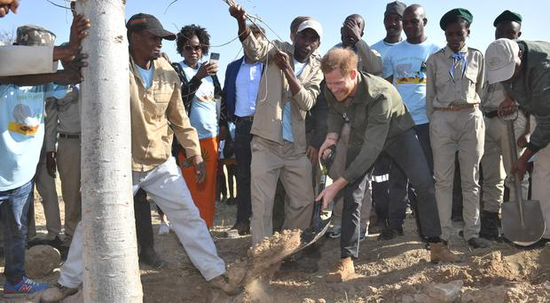 The Duke of Sussex plants a tree at the Chobe Tree Reserve in Botswana (Dominic Lipinski/PA)
