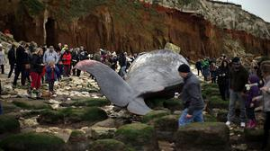 The discovery of the whale in Hunstanton, Norfolk, sparked much interest in the local community