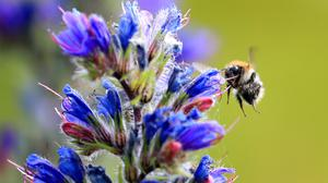 People are being urged to look out for bees in their local area (Gareth Fuller/PA)