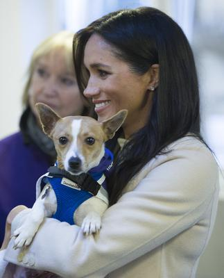 Meghan holding a Jack Russell called Minnie during her visit to Mayhew last year (Eddie Mulholland/Daily Telegraph)