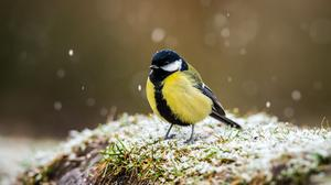 Researchers studied great tits (Ben Birchall/PA)
