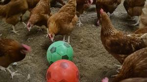 Farmer Phill Crawley has given his flock of chickens footballs to keep them entertained while they have to be kept indoors under national measures to reduce risk of transmission of bird flu. (Sunrise Poultry Farms Limited/ PA)