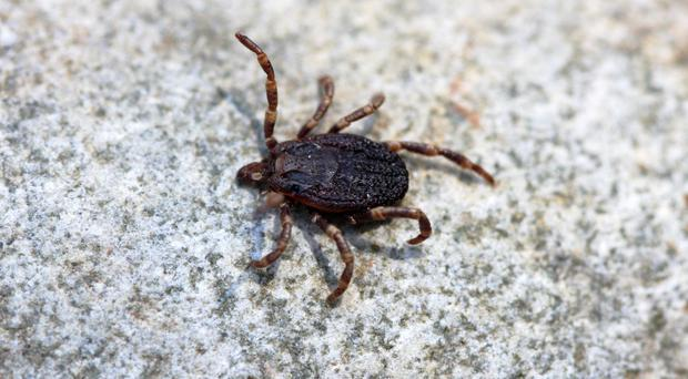 An app to track the location of ticks has been created to try and prevent the spread of Lyme disease (Natureresearch/E.Penalver/PA)