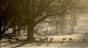 Deer in a frost covered Windsor Great Park (Steve Parsons/PA)