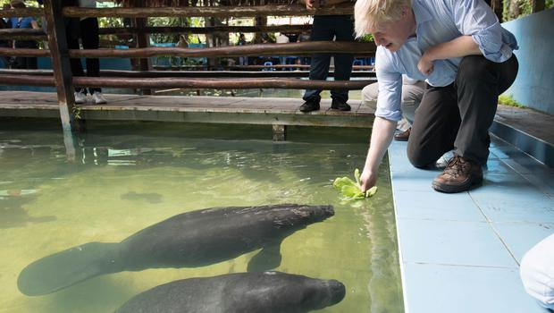 The Foreign Secretary attempts to feed manatees rescued from illegal trafficking in Peru (Stefan Rousseau/PA)